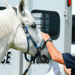 Polo At Sunset, a benefit for Mounted Patrol on July 29 2