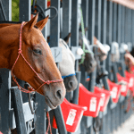 Polo At Sunset, a benefit for Mounted Patrol on July 29 4