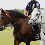Polo At Sunset, a benefit for Mounted Patrol on July 29 10